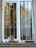 2019 Stray Cat Photographer new photo, cute cat stock image