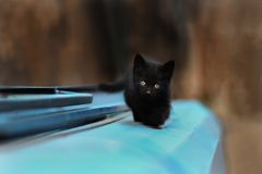 2019 Stray Cat Photographer new photo, cute small black cat. Stray Cat Photographer new photo, cute small black cat. All of my cats photos are from street cats royalty free stock image