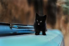 2019 Stray Cat Photographer new photo, cute small black cat. Stray Cat Photographer new photo, cute small black cat. All of my cats photos are from street cats royalty free stock images