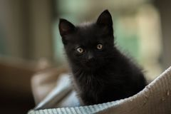 2019 Stray Cat Photographer new photo, cute small black cat. Stray Cat Photographer new photo, cute small black cat. All of my cats photos are from street cats royalty free stock photography