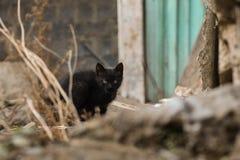 2019 Stray Cat Photographer new photo, cute small black cat stock photo