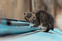 2019 Stray Cat Photographer new photo, cute small gray cat. Stray Cat Photographer new photo, cute small gray cat. All of my cats photos are from street cats royalty free stock photo