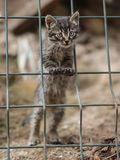 2019 Stray Cat Photographer new photo, cute small gray cat. Stray Cat Photographer new photo, cute small gray cat. All of my cats photos are from street cats stock image