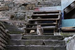 2019 Stray Cat Photographer new photo, cute street cat stock images