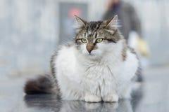 2019 Stray Cat Photographer new photo, cute street cats in the street. Stray Cat Photographer new photo, cute street cats. All of my cats photos are from street royalty free stock image