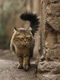 2019 Stray Cat Photographer new photo, cute street cats with long hair. Stray Cat Photographer new photo, cute street cats. All of my cats photos are from street royalty free stock photos