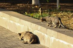 Stray Cat Photographer new photo, small tiger cat walks to a dog. Daily street cat photo. small tiger cat walks to a dog. All of my cats photos are from street stock photo