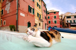 Stray cat playing with seagull feather to Boccadasse, Genoa Royalty Free Stock Photography