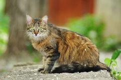 Stray cat portrait Royalty Free Stock Photography