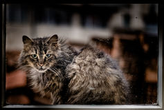 Stray Cat portrait. Picture of a  Stray Cat Royalty Free Stock Image