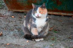 Stray cat portrait sitting on ground looking at camera.  Royalty Free Stock Photos