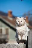 Stray cat posing Stock Photos