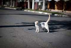 Stray cat posing Royalty Free Stock Images