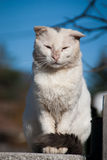 Stray cat posture Stock Photography