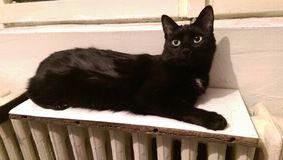 Stray cat on a radiator. Stray cat staying on a radiator stock photos