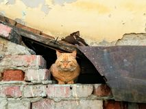 A stray cat Stock Photography