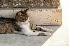 Stray cat resting. Aside ancient column Royalty Free Stock Image