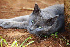 Stray cat resting on the ground. Portrait of a stray cat resting on the ground Royalty Free Stock Image