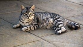 Stray cat resting in the shade. Stray tabby cat resting in the shade looking for the camera royalty free stock photography