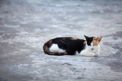 Stray cat resting on the street Royalty Free Stock Images