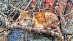 A stray cat resting on chairs. A stray cat resting in the streets of Karaköy İstanbul. And maybe thinking something Royalty Free Stock Images