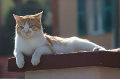 Stray cat. Resting on the wall Stock Photo