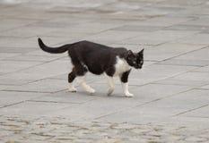 Stray cat. Roaming the streets Stock Photos