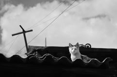 Stray cat on a roof looking attentively. A black and white image of a stray cat on a roof looking attentively Stock Photo