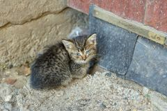 A stray cat sick with feline panleukopenia. Homeless cat royalty free stock image