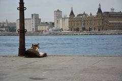 A stray cat sits on the docks in Istanbul royalty free stock photos