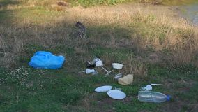 A stray cat sits on the grass in a garbage dump on the river Bank. A lot of plastic garbage in the Park on the grass. Environmental damage. Plastic pollution stock video footage