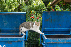 Stray cat Stock Image