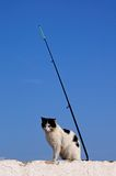 Stray cat sitting by fishing rod, Spain. Royalty Free Stock Image