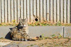 Stray cat sitting on the ground Royalty Free Stock Image