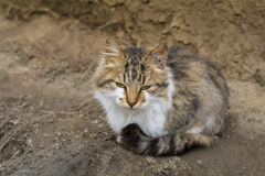 Stray cat sitting on the ground Stock Photo