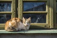 Stray cat sitting near old window Stock Photos