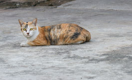 The stray cat sitting on the  road surface. Out door background Royalty Free Stock Images