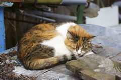A stray cat is sleeping on the street. Close-up Stock Photo