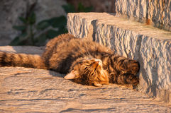 Stray cat sleeping Royalty Free Stock Image