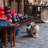 Stray cat in the souks of Marrakesh Stock Image