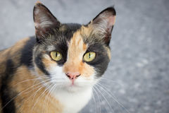Stray cat is staring something. Selective focus Stock Photography