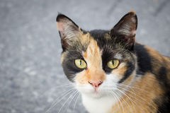 Stray cat is staring something. Selective focus Stock Images