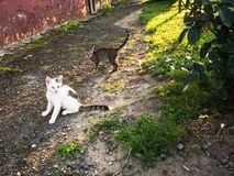 Stray cat. Relaxing on a street stock photo