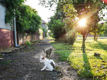 Stray cat. Relaxing on a street stock images