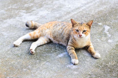Stray cat on street Royalty Free Stock Images