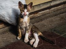 A stray cat on the streets looks straight in the camera royalty free stock images