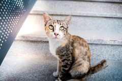 Stray Cat in the Urban City. Stray Cat in the Urban. Brown Striped Cat royalty free stock photo