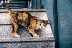 Stray Cat in the Urban City. Stray Cat in the Urban. Brown Striped Cat stock images