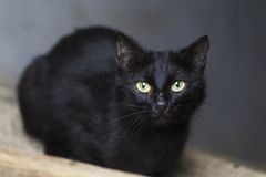 Stray cat in the urban environment Royalty Free Stock Images