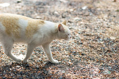stray cat walking on road Stock Images
